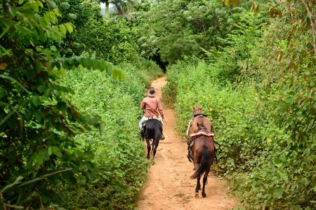 roadless: The Cuban cowboy is riding on horseback along roadless tracts in the Vinales valley. Valley de Vinales, Cuba, Pinar del Rio province