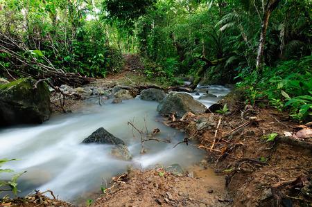 Panama, wild Darien jungle near Colombia border. Central America