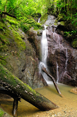 Colombia, wild Darien jungle of the Caribbean sea near Capurgana resort and Panama border. Central America