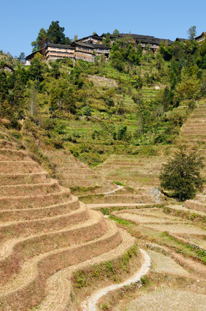 terracing: Ancient beautiful rice terraces of Longsheng near Guilin, Guanxi province, China