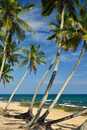 White sand and coconut palms on the beach in Tangalle on Sri Lances