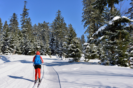 Woman in the colour dress on cross-country skis amongst trees coated with the snow in mountain in Poland Stock Photo