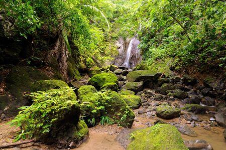 Wilder Darien-Dschungel nahe der Grenze zu Kolumbien und Panama. Zentralamerika.