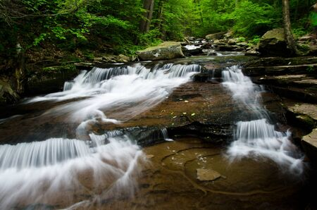 cascade: Cascade in the Forest