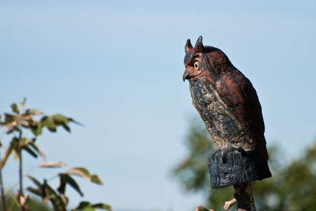 decoy: Artificial Owl Keeping Watch Stock Photo
