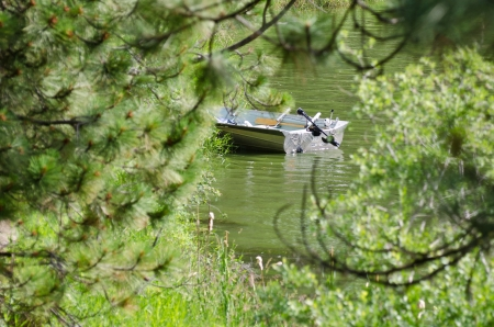 Partially Hidden Boat on a Secluded Lake
