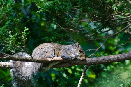 naptime: A Squirrel's Naptime