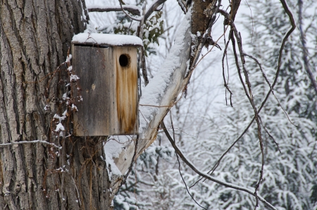 Wooden Birdhouse after a Fresh Snowfall photo