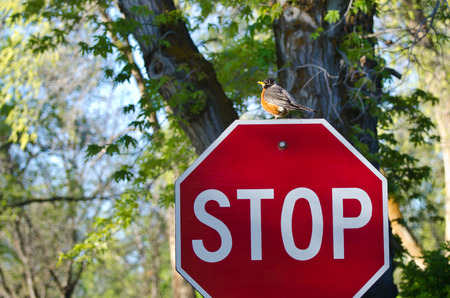protect: Protect the Environment – Robin and the Stop Sign Stock Photo