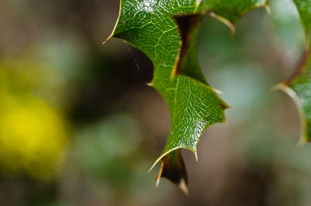 thorny: Nature Abstract - Thorny Green Leaf Stock Photo