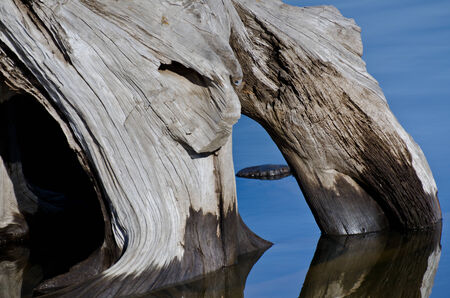 weatherworn: Nature Abstract - Weatherworn Driftwood Reflecting in the Water Stock Photo