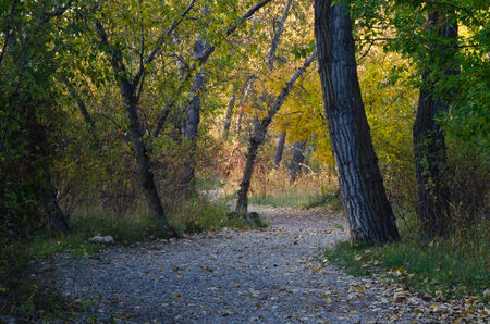 walking path: Walking Path Through the Autumn Forest