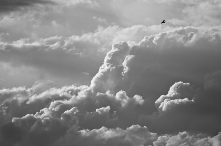 mountainous: Lone Bird Flying Above the Mountainous Storm Clouds