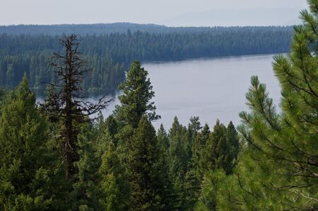 ponderosa pine: Mountain Lake Hidden Deep in the Pine Forest