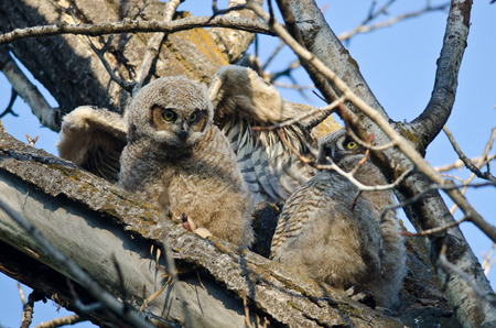 owlet: Cute Young Owlet Perched in a Tree