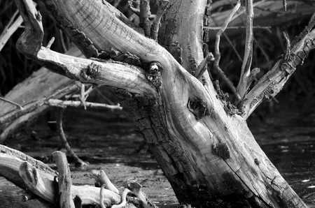 gnarled: Nature Abstract  - Gnarled and Weatherworn Driftwood Stock Photo