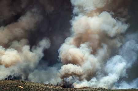 wildfire: Dense White Smoke Rising from the Raging Wildfire
