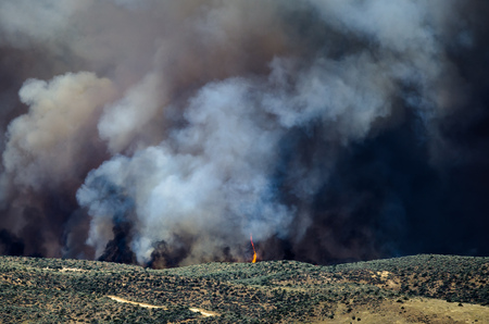 wildfire: Flames and Dense White Smoke Rising from the Raging Wildfire