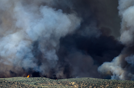 raging: Flames and Dense White Smoke Rising from the Raging Wildfire