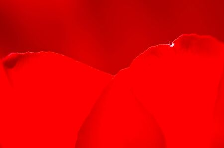 Nature Abstract:  Close Look at the Red Heart Shaped Tulip Petals of Spring