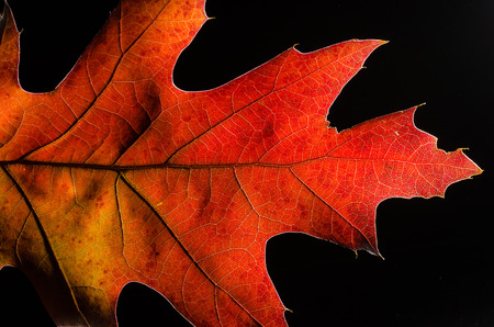 Close Look at the Beauty of a Colorful Autumn Leaf