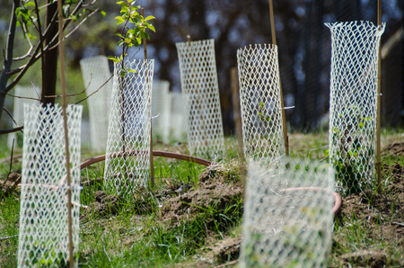 Garden Filled with Seedlings Protected by White Plastic Mesh Protector Tubes