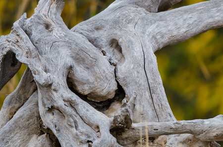 Nature Abstract – Naturally Gnarled and Weathered Worn Piece of Wood