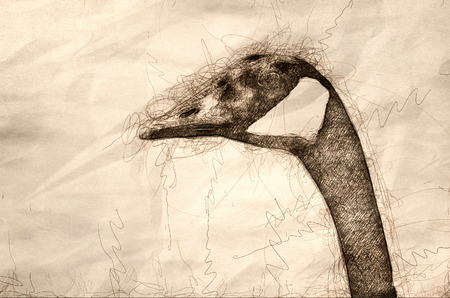 Sketch of a Canada Goose Profile