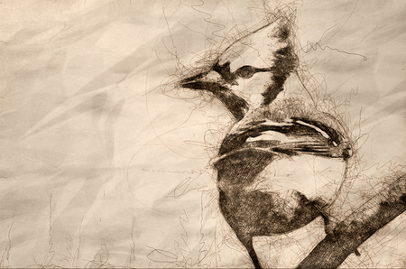 Sketch of a Blue Jay Perched in a Tree