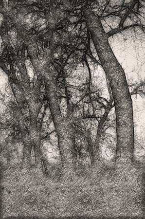 Sketch of Mood Shadows in the Dark Misty Forest Фото со стока