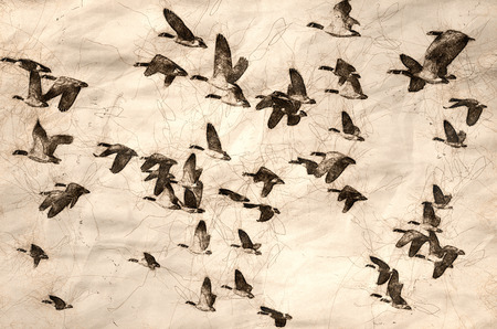 Sketch of a Large Flock of Geese Taking Flight Banco de Imagens
