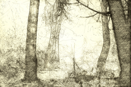 Sketch of a Misty Forest on a Cold Silent Morning 写真素材 - 117487189