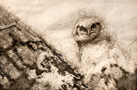 Sketch of a Young Owlet Making Direct Eye Contact From Its Nest Standard-Bild - 117487192