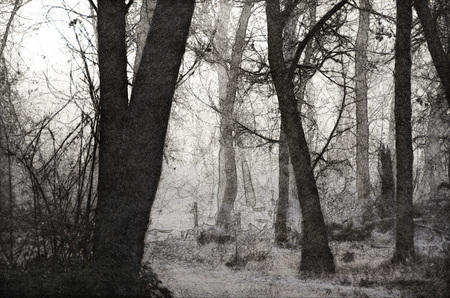 Sketch of a Misty Forest on a Cold Silent Morning 写真素材