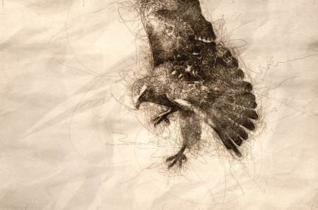 Sketch of a Red Tailed Hawk on the Hunt