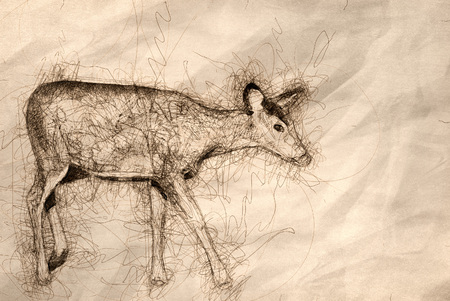 Sketch of a Deer in the Field 版權商用圖片