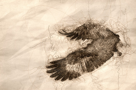 Sketch of a Bald Eagle Hunting On The Wing Stock Photo