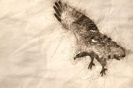 Sketch of a Red Tailed Hawk on the Hunt Standard-Bild - 117487249