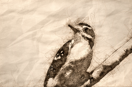 Sketch of a Downy Woodpecker Perched in a Tree