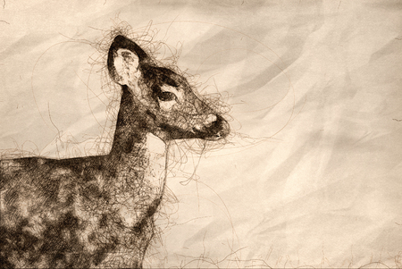 Sketch of a Close Profile of a Deer in the Field