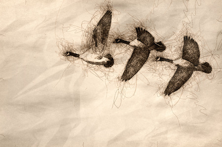 Sketch of Three Canada Geese Flying in a Blue Sky Banco de Imagens