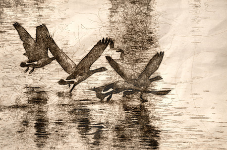 Sketch of Canada Geese Flying Over Water