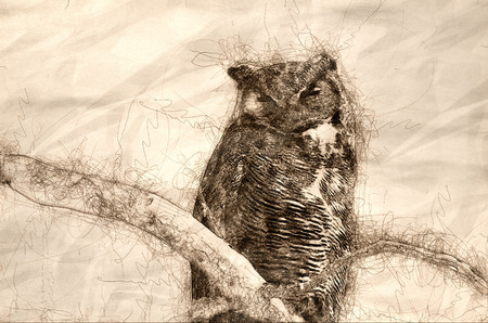 Sketch of a Great Horned Owl Perched on a Branch in a Tree