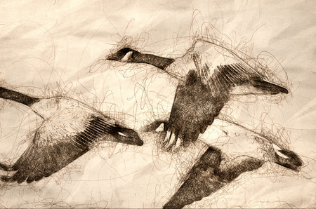 Sketch of Canada Geese Flying Across the Autumn Woods 写真素材