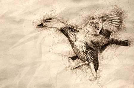 Sketch of a Mallard Duck Landing on the Cool Water Banco de Imagens
