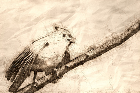 Sketch of a Young Tufted Titmouse Singing in a Tree Фото со стока