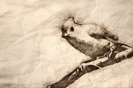 Sketch of a Tufted Titmouse Perched on a Branch