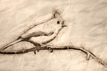 Sketch of a Tufted Titmouse Perched in a Tree