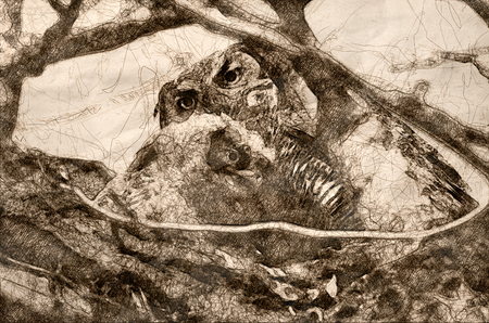 Sketch of a Young Owlet Spending Time With Mom Banco de Imagens