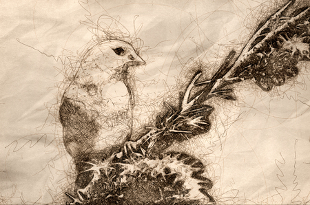 Sketch of an American Goldfinch Perched in a Tree